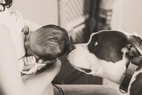 Pup sniffing NB.jpg