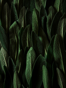 Sage | Catching Peelings Photography