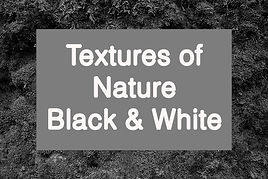 Veronika_Lavey_textures_of_nature_BW.jpg