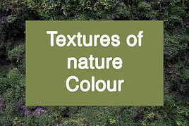 Veronika_Lavey_textures_of_nature_C.jpg