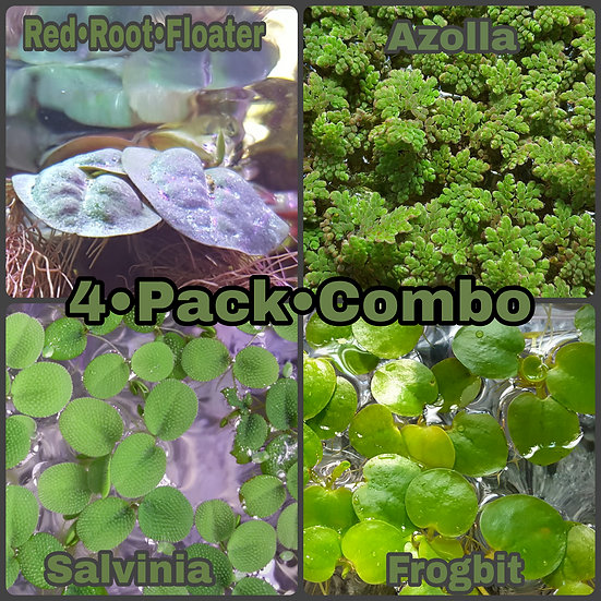 4 Pack Floating Plant Combo