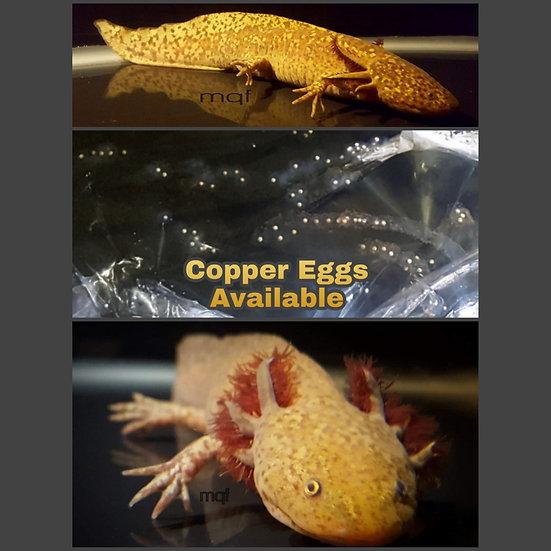 MQF Copper Eggs ~ Qty:30
