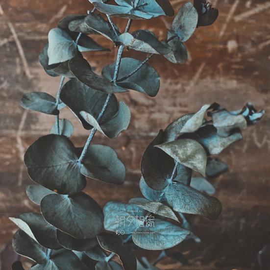 尤加利 (乾花) | 襯花