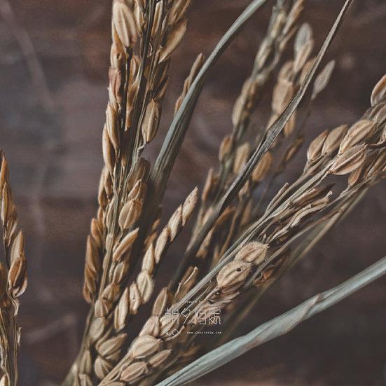 稻穗 (乾花) | 襯花