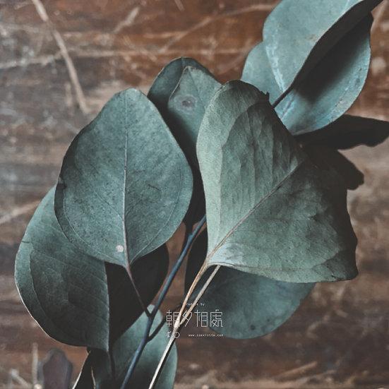 圓葉尤加利 (乾花) | 襯花
