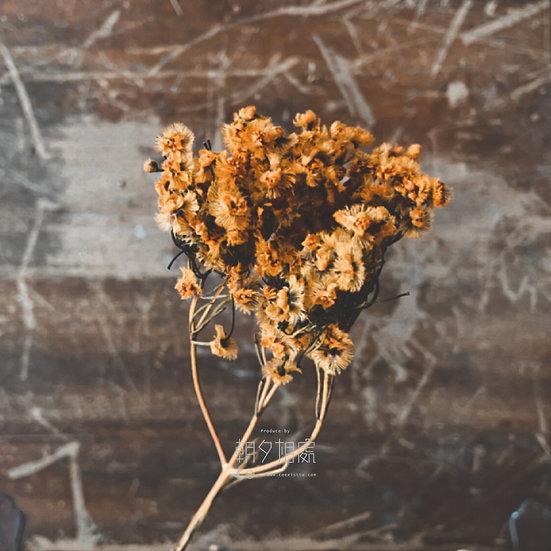 維多梅 (乾花) | 襯花
