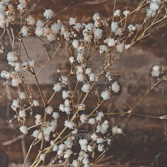滿天星 (乾花)   襯花