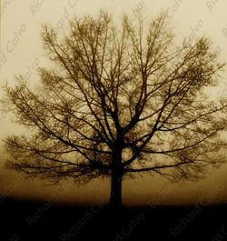 """""""Awakening"""" Richard Calvo Photography"""