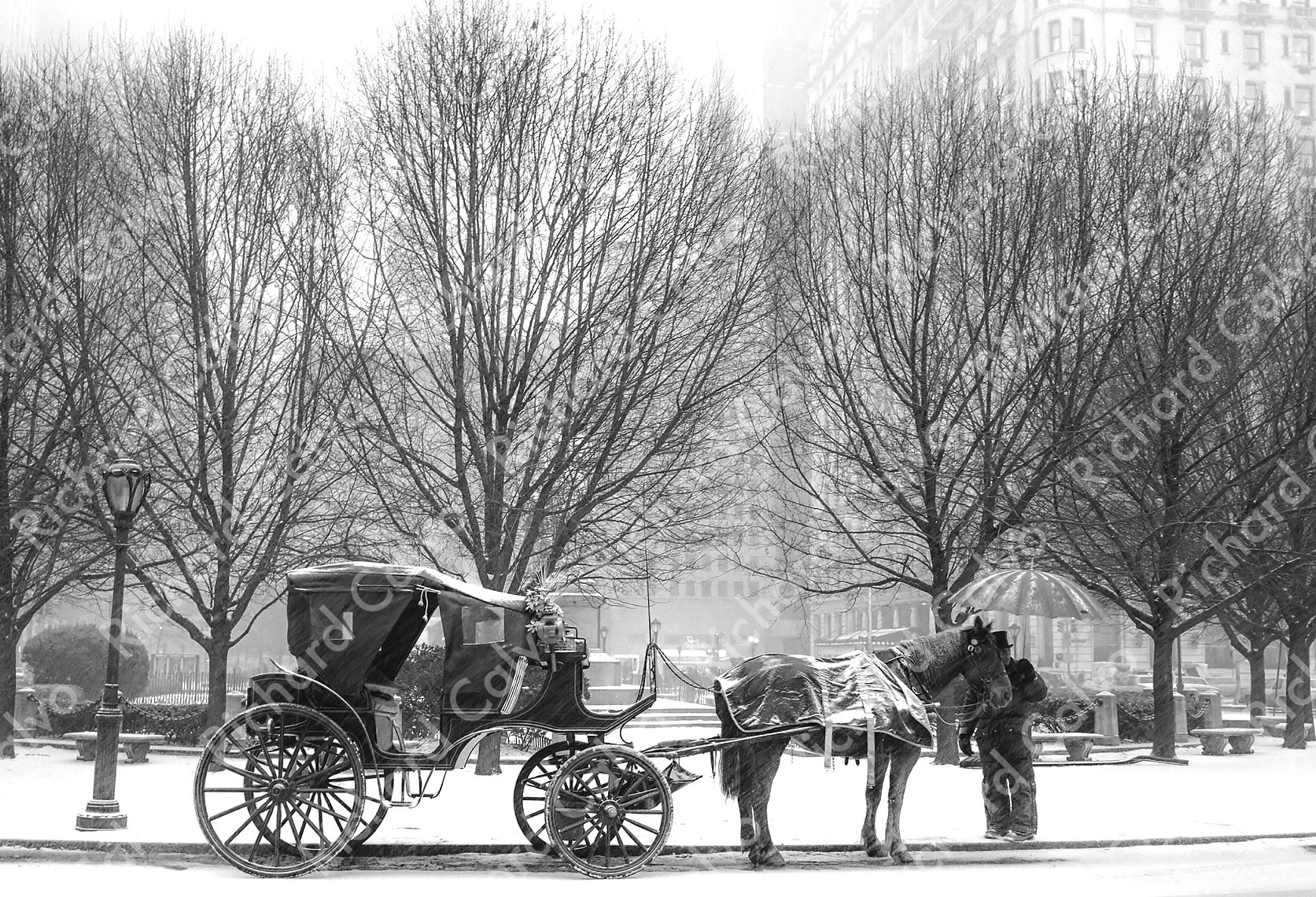 """Central Park Coach"" Richard Calvo Photography"