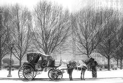 """Central Park Coach"" Richard Calvo Photography"