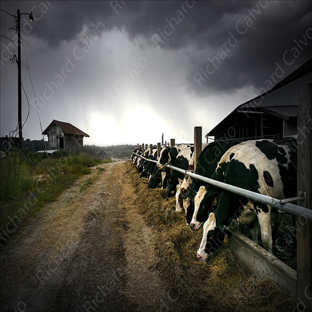 """Dairy Farm, Lewes, Delaware"" Richard Calvo Photography"