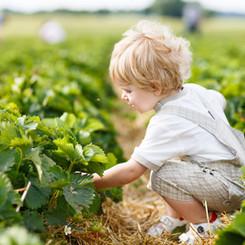 Child safety - Natural Pest Spray