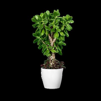 plants2.png