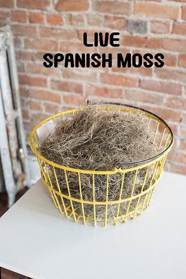 Spanish Moss Bundle, Live, Clean, Decor or Terrariums, Airplant, Crafts