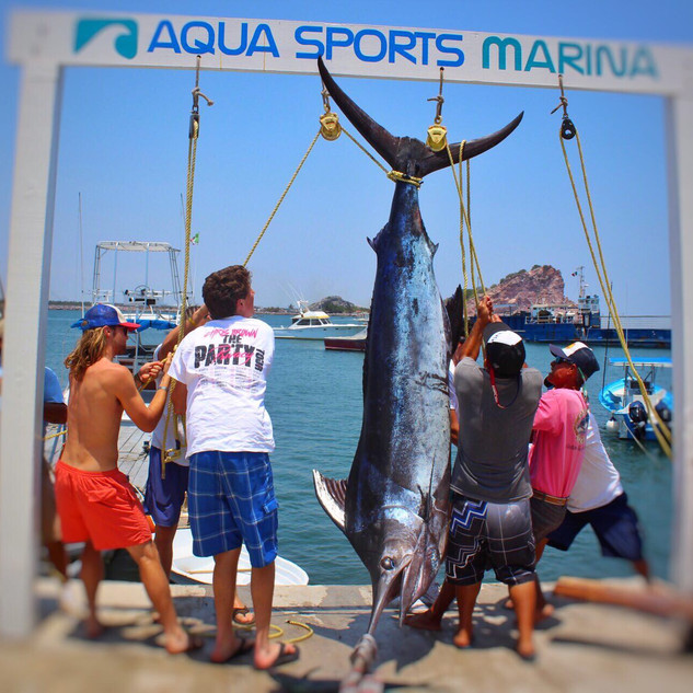 mazatlan fishing expeditions