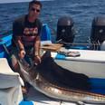 mazatlan sailfish