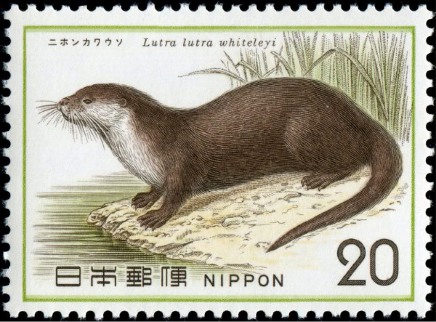 JapaneseOtter.png