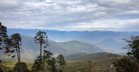 forest nature bhutan