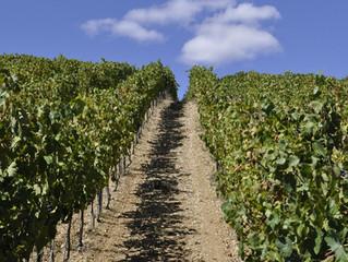 Bordeaux, Champagne, Burgund? Na klar! Gaillac?????
