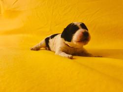 1 week puppy pics