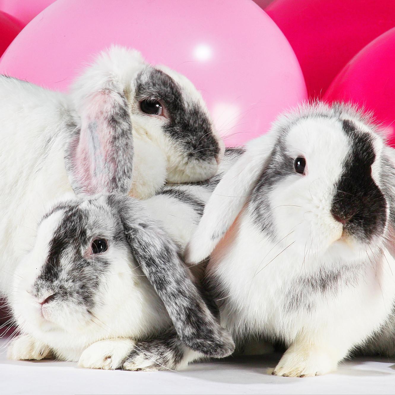 må kaniner få ærter