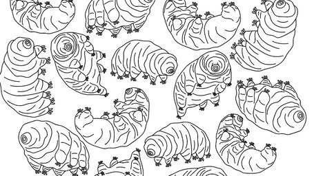 Tardigrade coloring book page