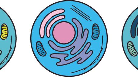 Logo_Banner.tif