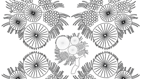 Diving beetle tarsus coloring page