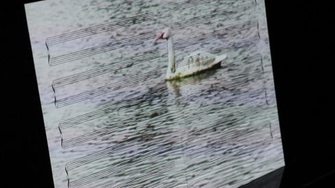 Het Zwanenmeer