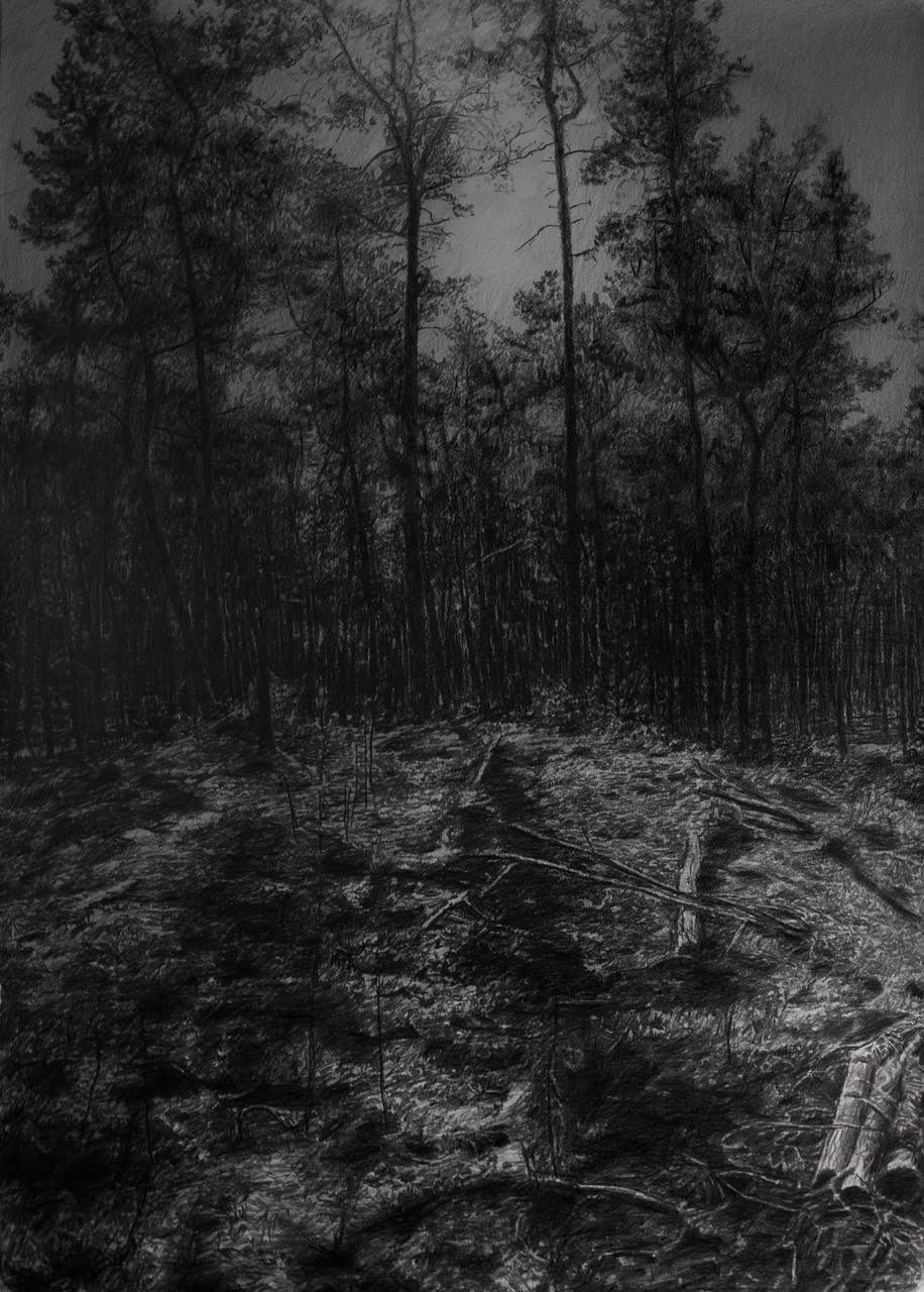 Moonwood, 100x70cm, potlood