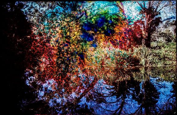 BotanicGardenF.jpg