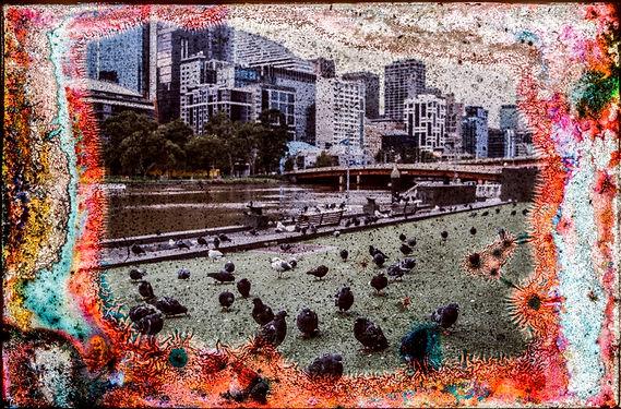 PigeonsYarraS.jpg