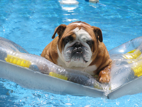 Dog Days of Summer are Here!