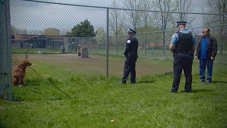 Police-and-Dog-Encounters.jpg
