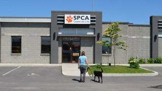 SPCA Ouestde L'Île awarded Vaudreuil-Dorion animal control contract