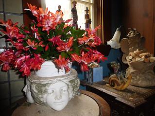 The English Gardener Fascinating fun flora festive facts
