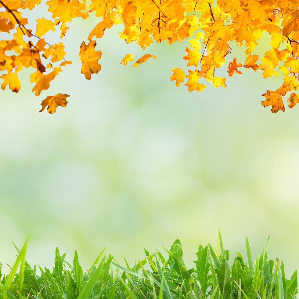 Summer Fall.jpeg