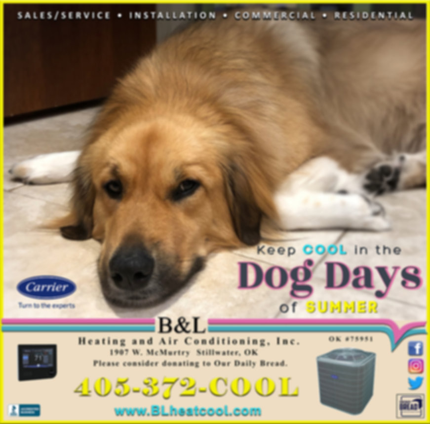 TV Spotlight August 2 2020 dog days.jpg