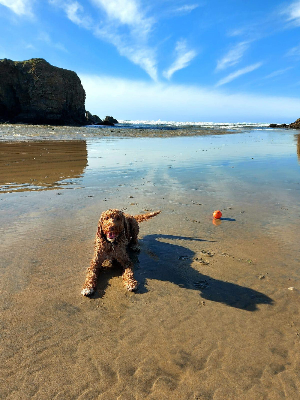 Ross's cockapoo dog Ralph laying on the sand with his ball. Blue skies and sea in the background