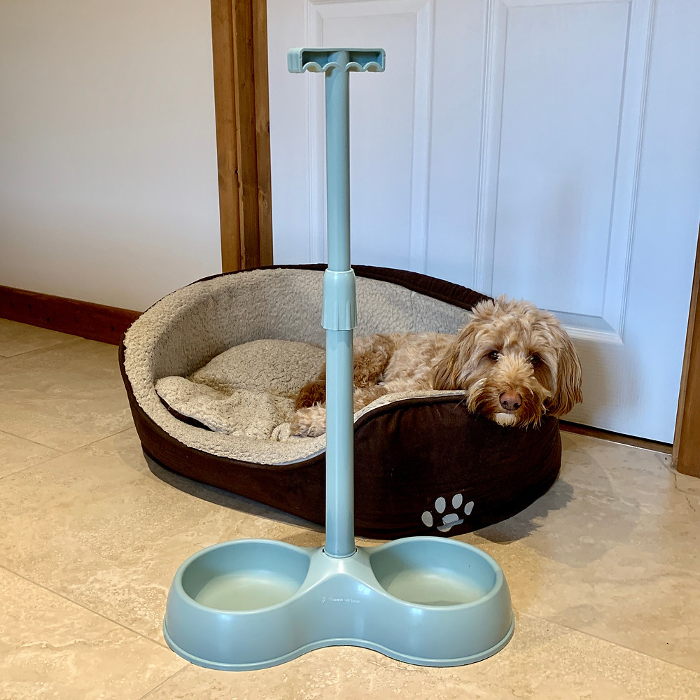The long handled pet bowl placed beside Ross's dog in his bed