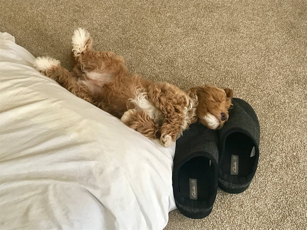 Baby photo of Ralph asleep with his head on Ross's slippers