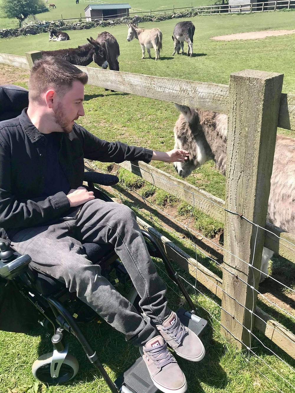 View of Ross sat in his wheelchair, reaching his arm into the donkey field to stroke one of them