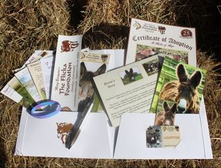 Contents of the adoption pack displayed on a hay bayle