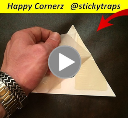 Sticky Traps, Happy Cornerz, Glue Traps, pest control new DIY solution for monitoring roaches, mice, spiders