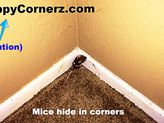 Tom Cats versus Sticky Traps, Mouse Glue Traps, DIY