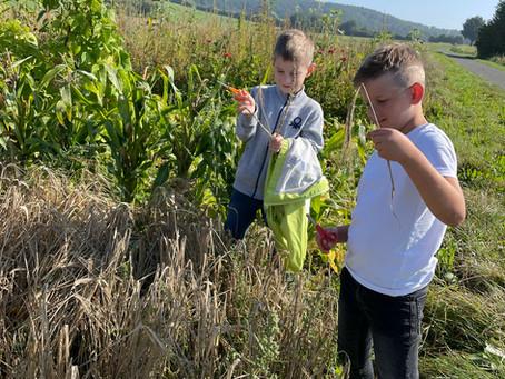 Getreideprojekt im RUZ