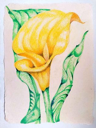 Blossom Flowers 7