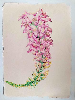Blossom Flowers 6