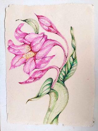 Blossom Flowers 3
