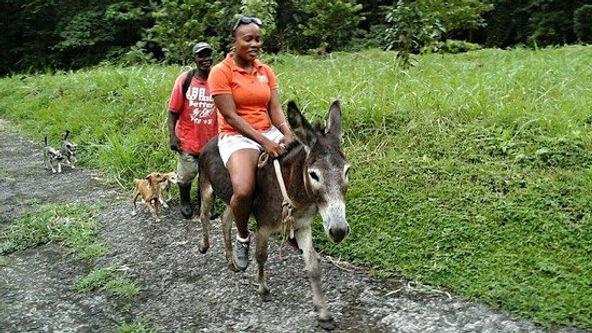 a mule ride